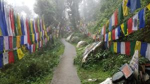 CamiDharamsala